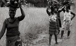 Ngày Quốc tế Phụ nữ nông thôn: công bằng về cơ hội, nguồn lực